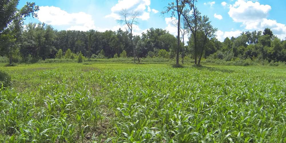 A Secluded FoodPlot